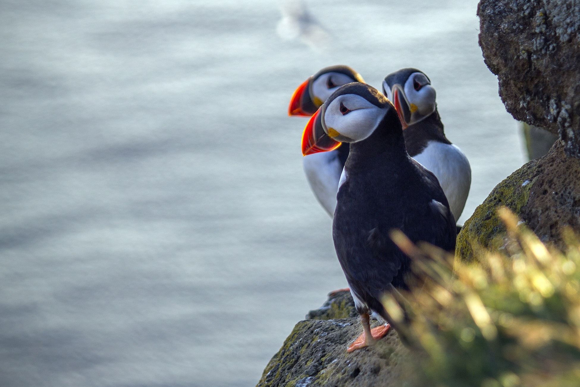 Puffin tour Private yacht tour